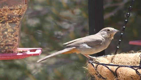 Darren Moll - <pre>Birds are plentiful in Prescott area.  We insure many homes in the area.</pre>