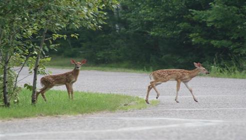 Darren Moll - <pre>Watch out for deer in the Prescott area!</pre>