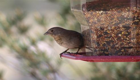 Darren Moll - <pre>Prescott area bird</pre>