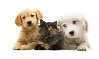 Pet Insurance available now!
